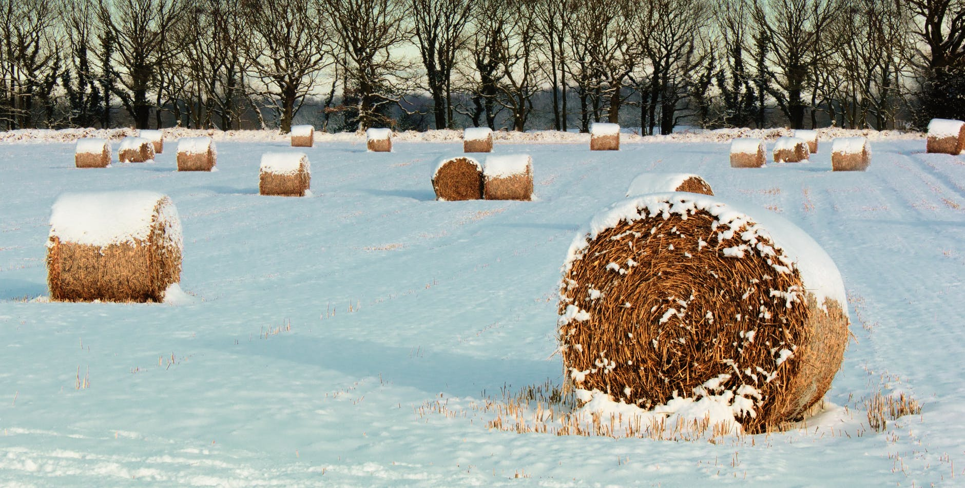 Now is the time for beef producers to prepare their cattle operations for winter.