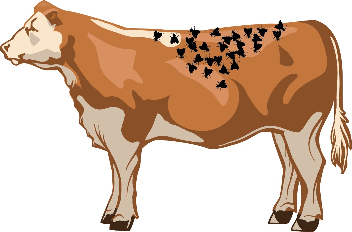 Illustration of an excellent number of flies on a cow