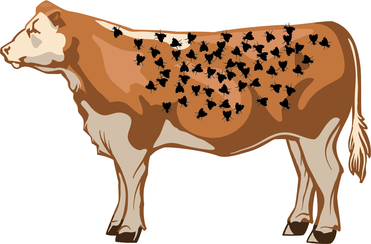 Illustration of a good number of flies on a cow