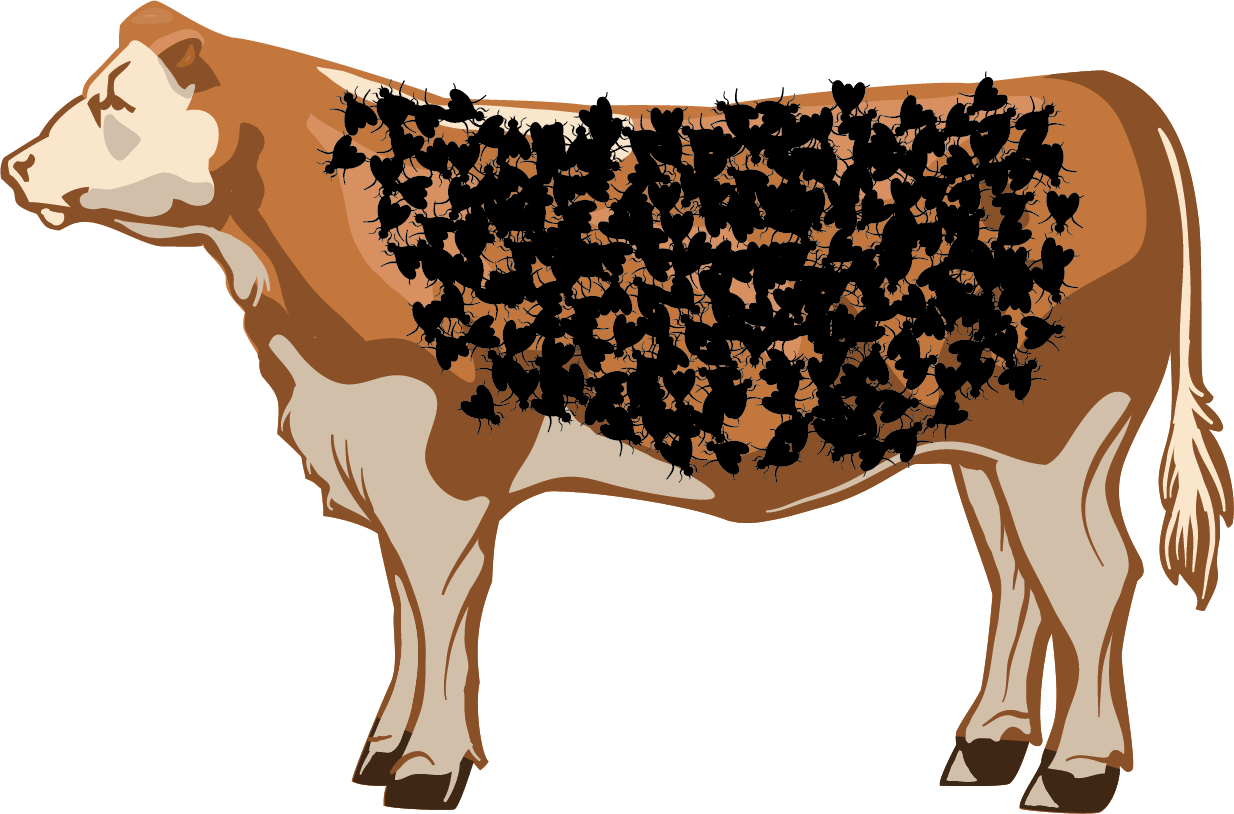 Illustration of an unacceptable number of flies on a cow